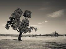 Manassas Battlefield Monochrome Royalty Free Stock Image