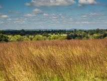 Manassas Battlefield Scene: Tall Grass, Trees, and Hills Royalty Free Stock Photo