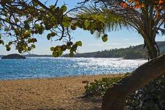 ManatÃ海岸,波多黎各 免版税图库摄影