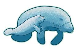 manatees Arkivbild