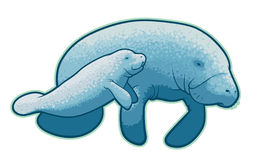 Manatees. Illustration of a mother and baby manatee Stock Photography