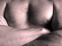 Manbröstkorg royaltyfria bilder
