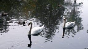 Mancanza nel parco di Slottsskogen - Svezia Immagini Stock