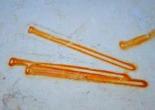 Manchas aherrumbradas de los clavos Foto de archivo