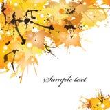Manchas blancas /negras del otoño Fotografía de archivo libre de regalías