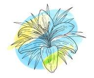 Manchas blancas /negras monocromáticas del ejemplo y de la acuarela del vector de la flor del lirio Tigre hermoso lilly aislado e Fotos de archivo libres de regalías