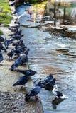 Manchas de aceite sucias en la superficie del agua del lago contaminada como a Fotos de archivo libres de regalías