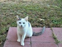 Manche el gatito fotografía de archivo libre de regalías