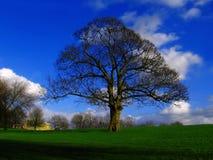 Manchester, parque de Heaton, Inglaterra, Reino Unido Imagens de Stock