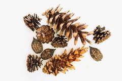 Manchu nuts , pine and  fir cones closeup. Manchurian walnut, pine and  fir cones closeup on a white background Royalty Free Stock Images