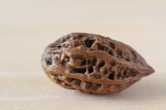Manchurian walnut. (Juglans mandshurica) on the table Stock Image