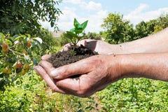 Manciata dell'agricoltore di suolo con il germoglio verde Fotografia Stock Libera da Diritti