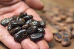 Manciata di fagioli sbucciati del cacao Fotografie Stock Libere da Diritti