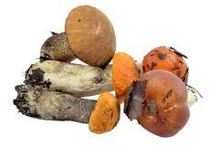 Manciata di funghi selvaggi commestibili, messa in evidenza del legno Fotografie Stock Libere da Diritti