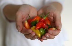 Manciata di peperoni di peperoncini rossi Immagine Stock
