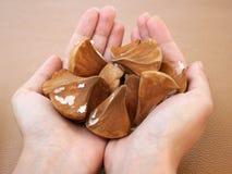 Manciata di semi esotici della palma Immagini Stock