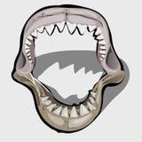Mandíbula dentudo de un tiburón con una boca abierta Fotografía de archivo