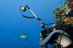 Mandíbulas grises del equipo de submarinismo de un tiburón del diverA listos para atacar a un buceador del fotógrafo Foto de archivo libre de regalías
