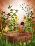 Mand en zonnebloemen royalty-vrije illustratie