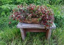 Mand met aardbeien die zich op een houten bank bevinden Royalty-vrije Stock Foto