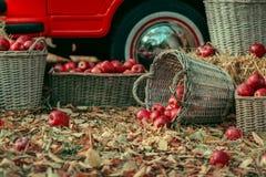 Mand met appelen Royalty-vrije Stock Foto