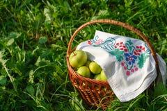 Mand met appelen op het gras Stock Afbeelding