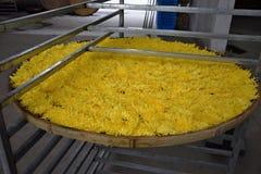 Mand met bloemen van gele chrysanten die voor het drogen voorbereidingen treffen stock foto's