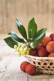 Mand met de rijpe vruchten van arbutusunedo Stock Foto