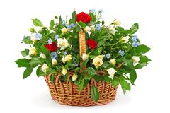 Mand met verse witte en rode rozen Stock Afbeeldingen