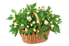 Mand met verse witte rozen Royalty-vrije Stock Fotografie