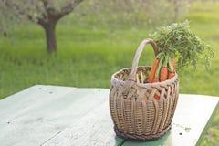 Mand met wortelen Stock Foto