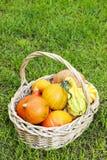 Mand pompoenen in de tuin Stock Foto's