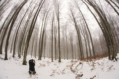 Mand taking pictures with smart phone of forest in wInter time i Stock Photos