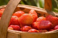 Mand van de aardbeien Royalty-vrije Stock Fotografie