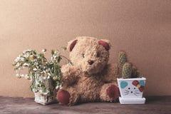 Mand van droge bloemen en een teddybeer met potten van cactus Stock Foto