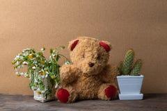 Mand van droge bloemen en een teddybeer met potten van cactus op houten lijst met oude bruin Stock Afbeelding
