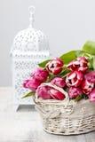 Mand van mooie roze tulpen Royalty-vrije Stock Afbeeldingen