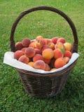 Mand van perziken stock foto's