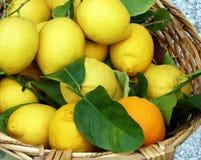Mand van verse citroenen Royalty-vrije Stock Afbeelding