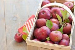 Mand van verse geplukte appelen Stock Afbeelding