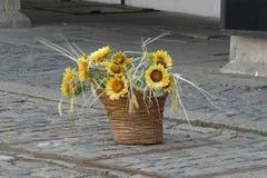 Mand van zonnebloemen Stock Fotografie