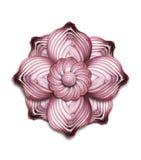 Mandala κρεμμυδιών Στοκ εικόνες με δικαίωμα ελεύθερης χρήσης