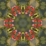 mandala πεταλούδων Στοκ φωτογραφία με δικαίωμα ελεύθερης χρήσης