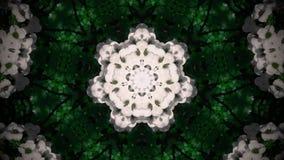 Mandala astratta del fiore bianco Fotografia Stock