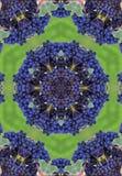 Mandala blu dei winegrapes illustrazione di stock