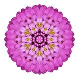 Mandala caleidoscopica rosa del fiore isolata su bianco Immagini Stock