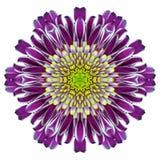 Mandala Chrysanthemum Flower Kaleidoscope Isolated en blanco fotografía de archivo libre de regalías