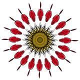 Mandala colorida en el fondo blanco Foto de archivo libre de regalías