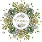 Mandala con las hojas tropicales Imagen de archivo libre de regalías