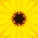 Mandala Concentric Flower Center Kaleidoscope jaune Image stock